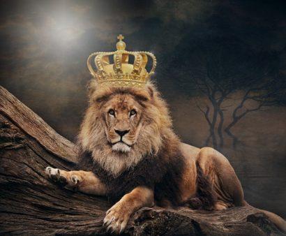 roi du monde réglementation