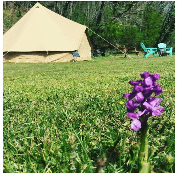 Belair le Camping